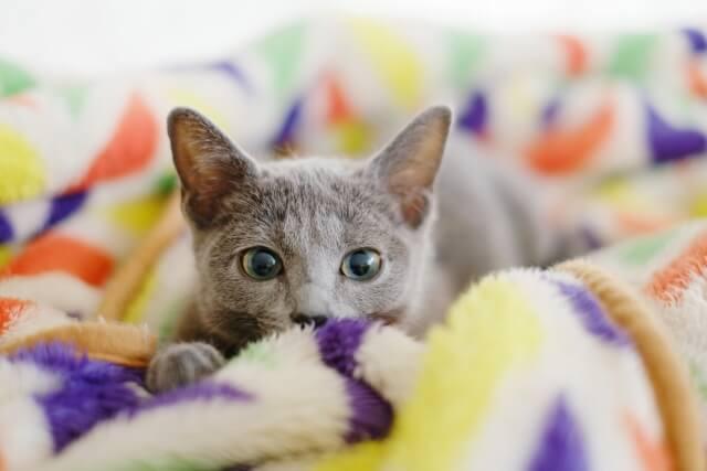 毛布で安心する猫