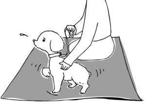 避難所の犬