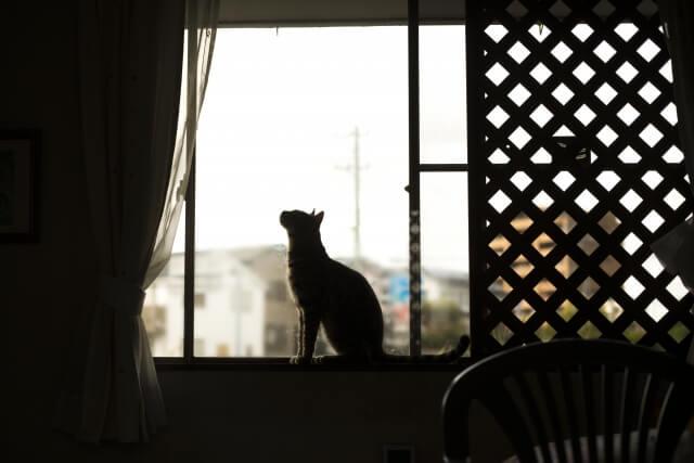 家で待つ猫