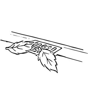 落ち葉が乗った排水溝